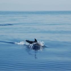 Aeolian Dolphin Research